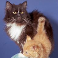 "Cat ""Falafel"" and ""Kitten Red"""