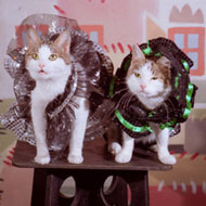 "Cat ""Matreshka"" and Cat ""Kartoshka"""